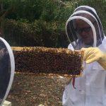 Flea iz RHCP postao pčelar