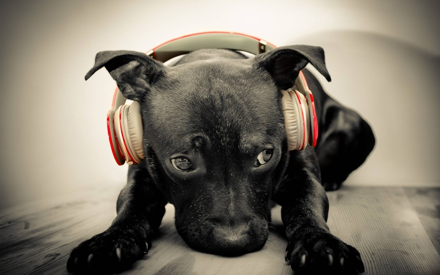 cute-dog-headphones-music