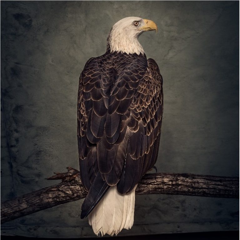 Clutch – Book of Bad Decisions (2018)